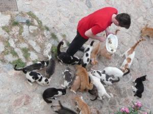 Als je je afvraagt waarom er zoveel katten op terrassen rondlopen...